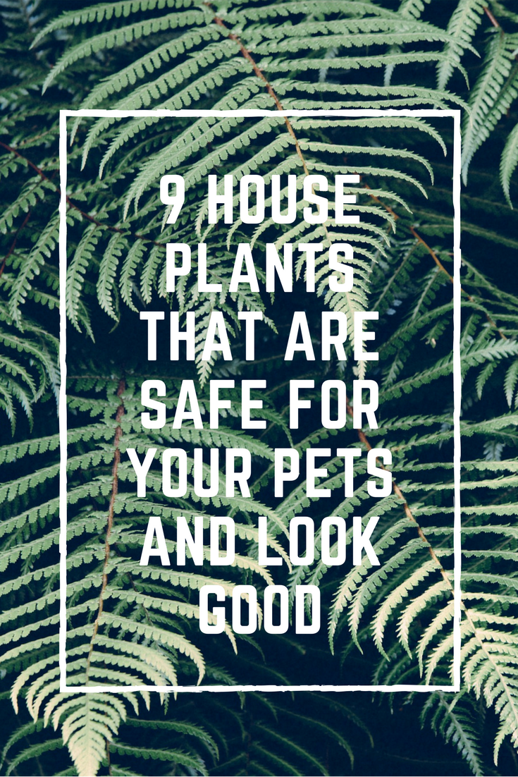 9 House Plants That Are Safe for Your Pets and Look Good - MCLife ...