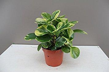 pet friendly houseplants