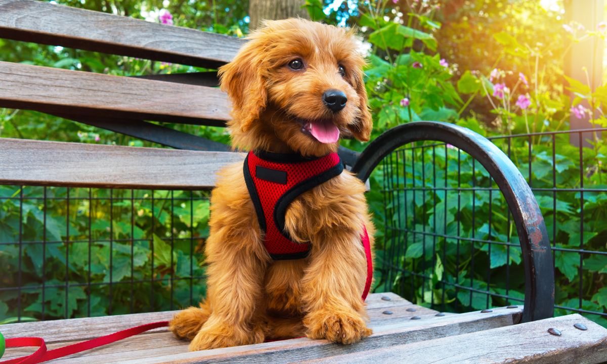 picture of cute dog on bench