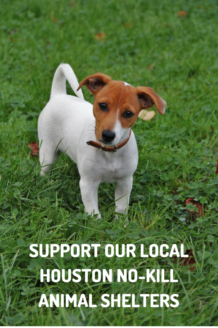 Our local Houston no-kill animal shelters provide a often overlooked service to our neighborhoods and communities where we live, learn, work and play. That why we want to give a few of our local no-shelters a shout out for their outstanding work.