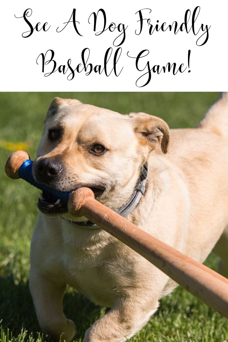 See A Dog-Friendly Baseball Game! The Houston Astros host one dog day every year, where furry companions are invited to Minute Maid Park for a game. Check the team's website to see when the next dog day is, and get your tickets early, because they might sell out.