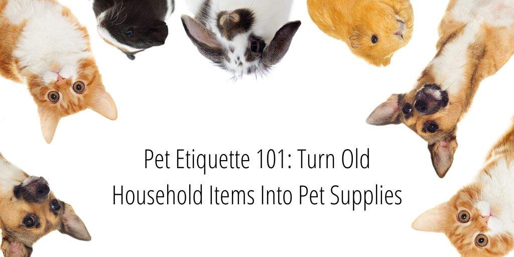 Today we're talking about pets! Living in an apartment with pets can be challenging. One of the ways you can make it easier is by turning old household items into pet supplies!