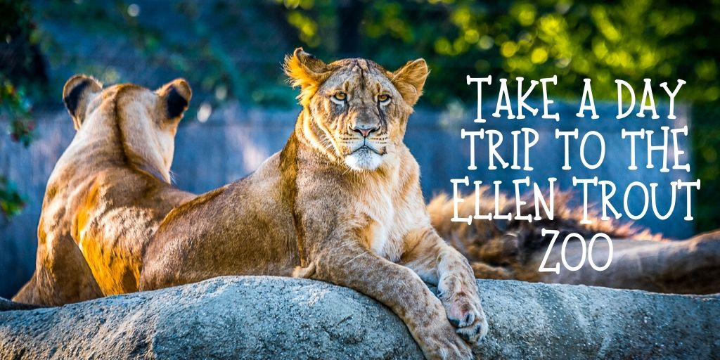 Searching for something new to do while family is visiting for the holidays? Take a day trip to the Ellen Trout Zoo.