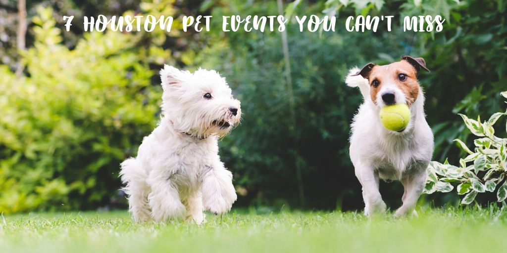 Houston living is awesome. There's something for everyone and today we're focusing on Houston pet events that you won't want to miss out on. These 7 Houston pet events you can't miss will show you just how much we have going on!