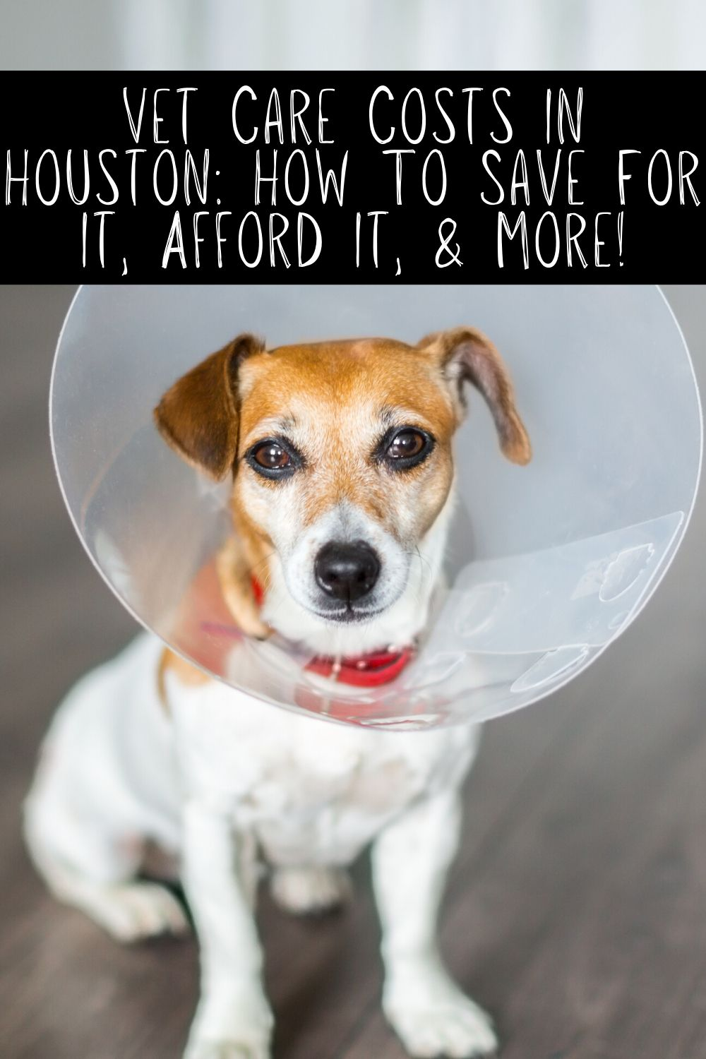 Vet care costs in Houston don't have to be overwhelming. There are ways to prepare for vet care costs and we're going to walk you through it today! Also check out some of the great Houston veterinarian choices below for all of your pet care needs.